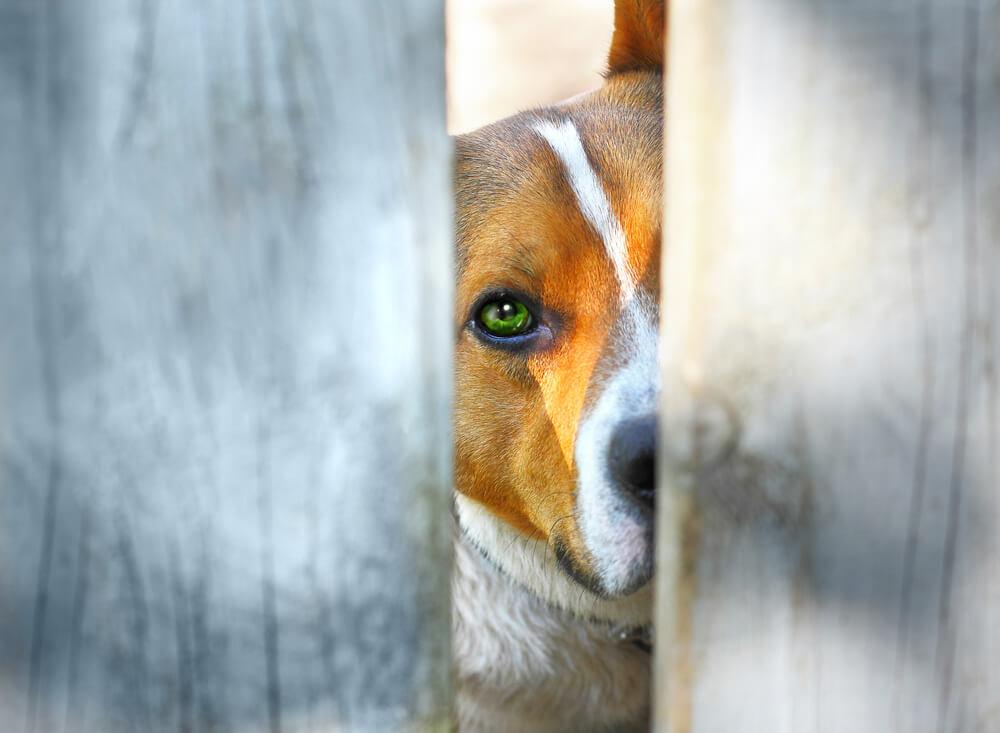 動物虐待の実態