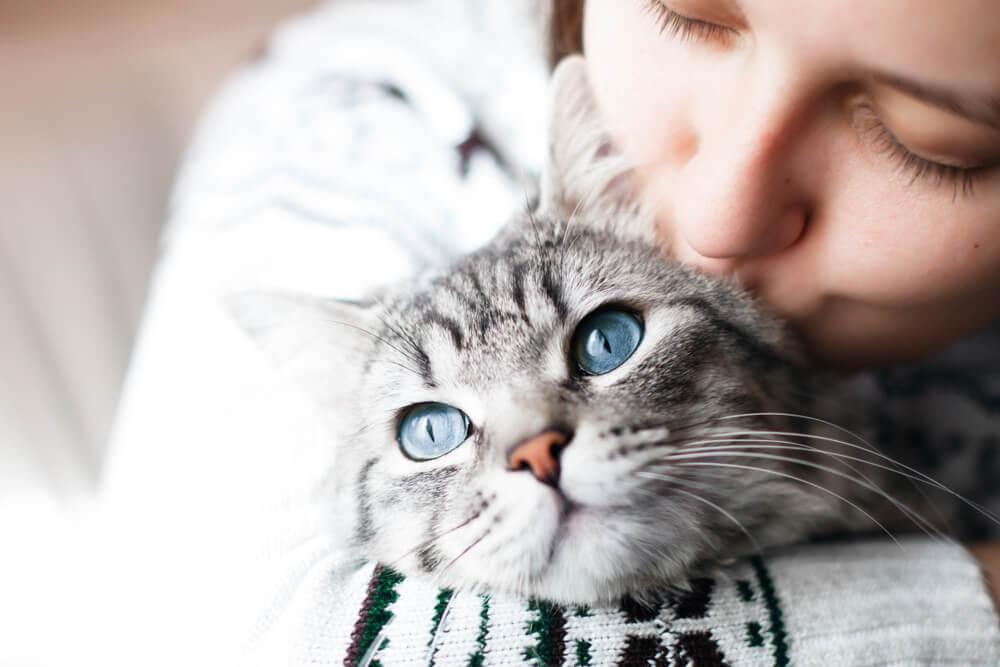 ペット引き取り権を獲得するための戦法