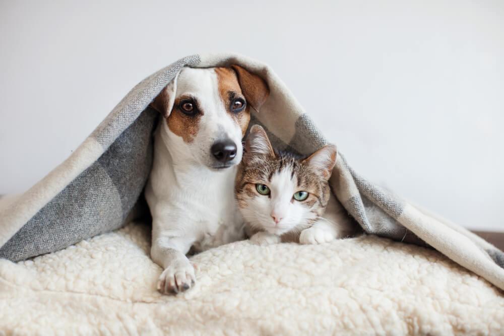 ペット(犬・猫)飼育状況