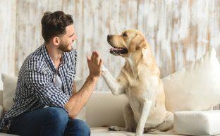 離婚のとき愛するペットを引き取るために行動すべき3つのこと