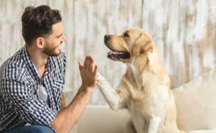 離婚時に愛するペットを引き取るために知っておくべき7つのこと